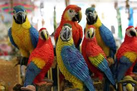 A Group of Parrots Image - Science for Kids All About Parrots