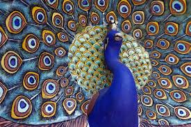 Peacock God in India Image