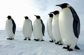 A Penguin Group Standing Image
