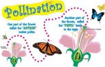 Pollination and Fertilization of Plants