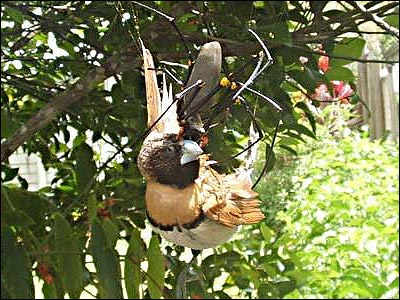 Spider eating a Bird image