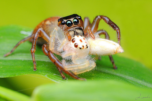 How Do Spiders Eat Their Prey For Kids