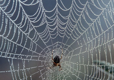 spider-on-a-web image