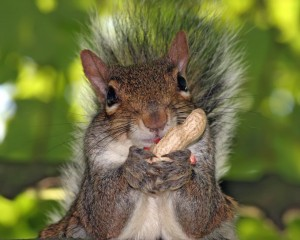 Squirrel Eating Nuts Image - Science for Kids All About Squirrels