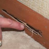 Furniture Damaged By Termites Image