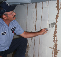 A Wall Damaged by Termites Image