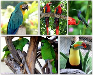 Brightly Colored Tropical Birds Image