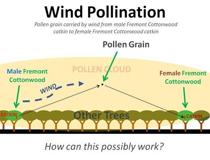 How Wind Pollination Works Image