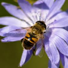 Honey Bees – The Natural Honey Making Factories