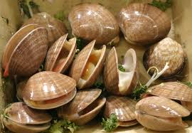 clams-in-a-bowl image