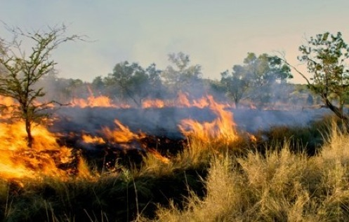 Fires on Grasslands - Grasslands Quiz