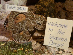 Rattlesnakes in the Sonoran Desert Image