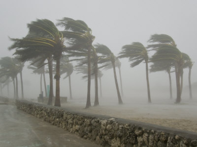 Trees during a Hurricane Image - Science for Kids All About Typhoons and Hurricanes