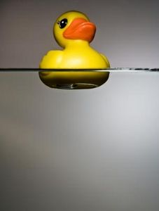 Rubber Duck Floating on Water Image