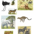 animals-that-live-in-grasslands image