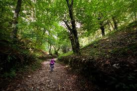 Walking in the Forest - Science for Kids All About Forests