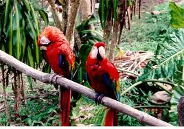 Birds in the Rain Forest Image