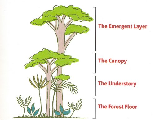 Layers Of The Rain Forest: Layers Of The Rainforest Worksheet At Alzheimers-prions.com