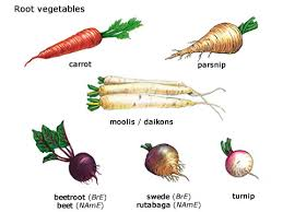 Kinds of Root Vegetables Image