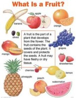 What is a Fruit, its Types and Characteristics?