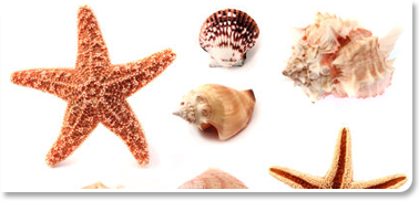 Sea Mollusks – Poisonous And Edible Mollusks