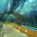 underwater-tunnel image