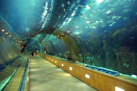 Underwater Tunnel Image