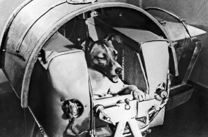 Laika, Russian Dog Who Went to Space Image