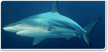 Image of Shark Family