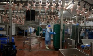 Meat Packing Factory Image -Science for Kids All About Factories