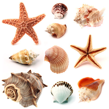 Samples of Different Mollusks Image - Science for Kids All About Sea Mollusks