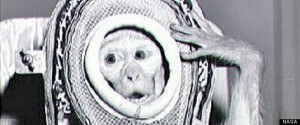Albert II, a Monkey Who Went to Space Image