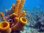 Plants or Animals? Strange Undersea Creatures