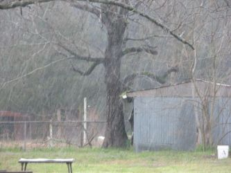 Sleet in the Yard Image