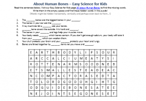 human bones worksheet - downloadable free to use science word, Skeleton