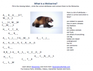 Wolverines Worksheet - Easy Science Worksheet for Kids about Wolverines