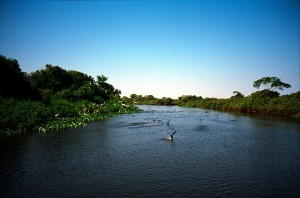 All about Brazil Fun Earth Science Facts for Kids - image of Pantanal, Brazil