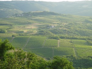 All about Croatia for Kids - Image of a Wine Farm in Croatia