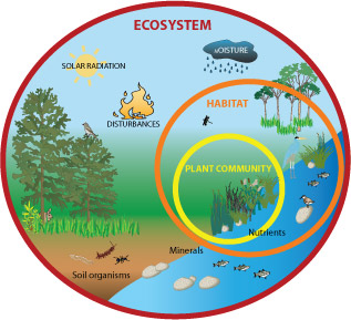 All about Ecosystems Easy Science for Kids - a Diagram of an Ecosystem