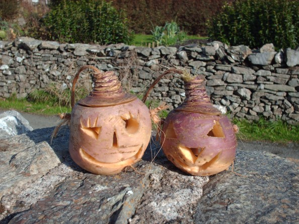 All about Halloween in Ireland Easy Science for Kids - Carved Turnips for Halloween in Ireland