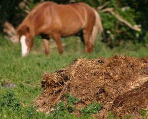 All about Healthy Soil Fun Earth Science Facts for Kids - Animal Manure Used as a Fertilizer for Healthy Soil