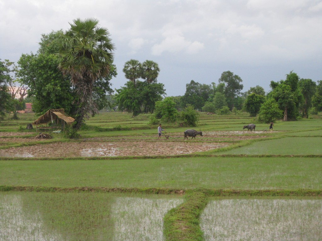 All about Laos Fun Facts for Kids - Image of the Laos Rice Fields