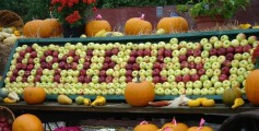 All about New England Fun Facts for Kids - image of the New England Apple Festival