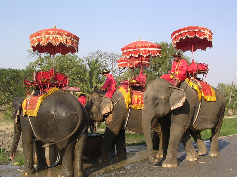 All about Thailand Fun Facts for Kids - Image of Thai People Riding Elephants - Thailand Worksheet