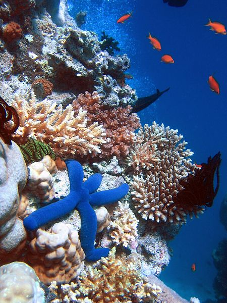 All about the Great Barrie Reef Easy Science for Kids - Starfish and Corals in the Great Barrier Reef - Great Barrier Reef Quiz