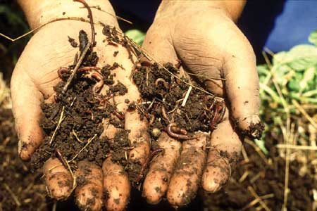 Easy Earth Science for Kids All About What's in Soil - image of Earthworms in Soil - Soil Worksheet