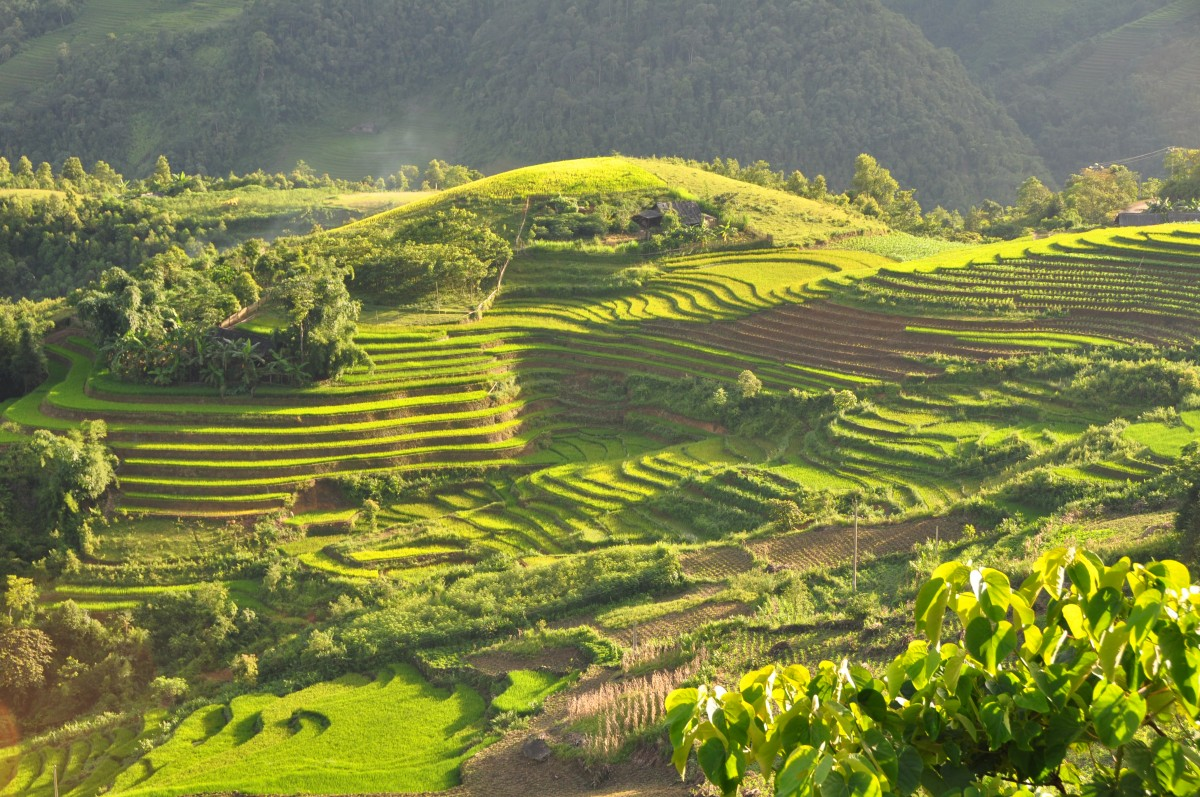 Easy Geography for Kids on Vietnam - Image of the Terraced Fields in Sa Pa Vietnam - Vietnam Quiz