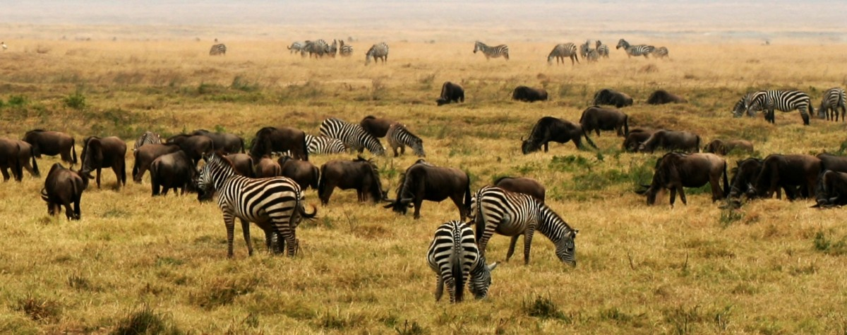 Easy-Science-for-Kids-on-Africa-Image-of-a-Grassland-in-Africa