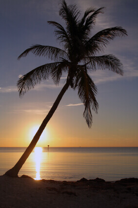 Tropical Climate | www.pixshark.com - Images Galleries ...