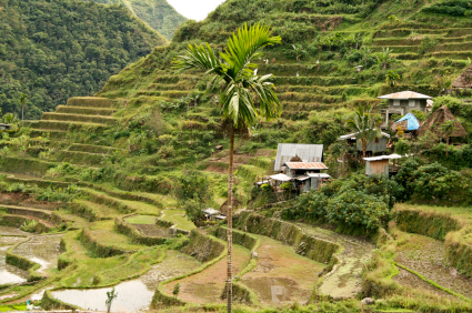 Fun Facts for Kids on Philippines - Image of the Rice Terraces - Philippines Quiz